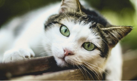 What is Toxic to Cats